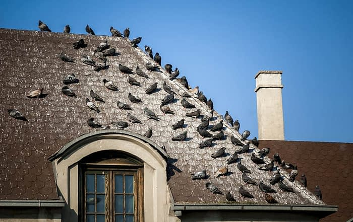 Can Bird Droppings Damage Your Roof